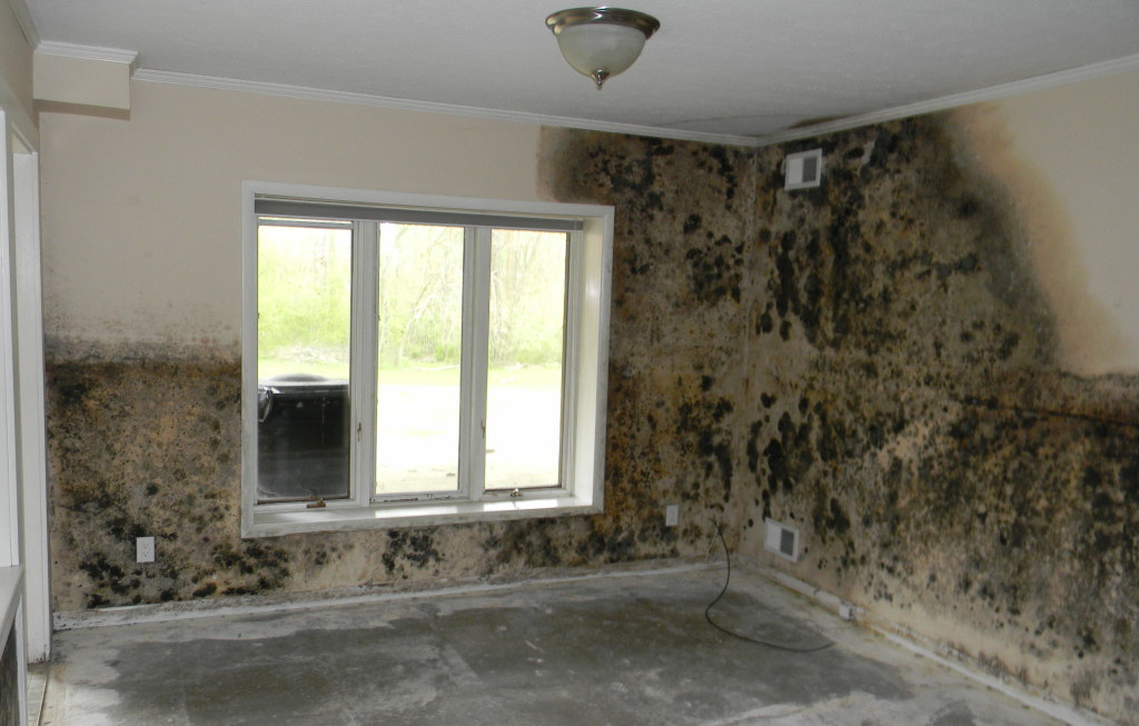 Portland Mold Damage